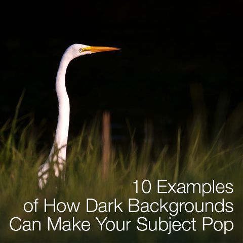 how dark background pops the subject