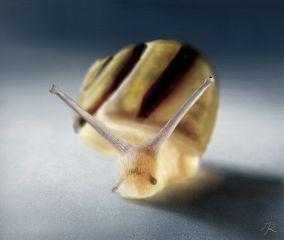 drawing digitaldrawing snail