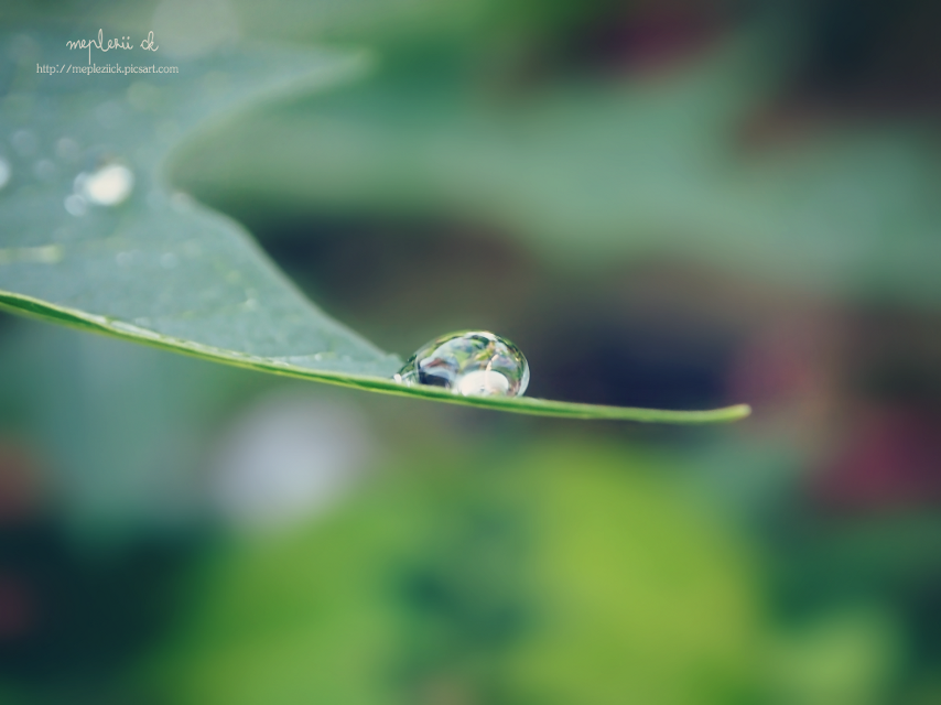 """Happy birthday dear Michael @michel2303 ""  #nature #photography #drops #birthday #spring"