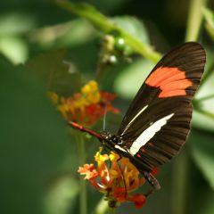 photography macro nature butterflies mysanctuary