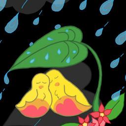 dcbirdhouse harnav love lovebirds dcleaf dcrainyday