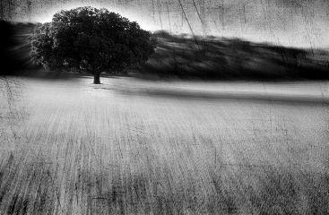 landscape tree blackandwhite photography freetoedit