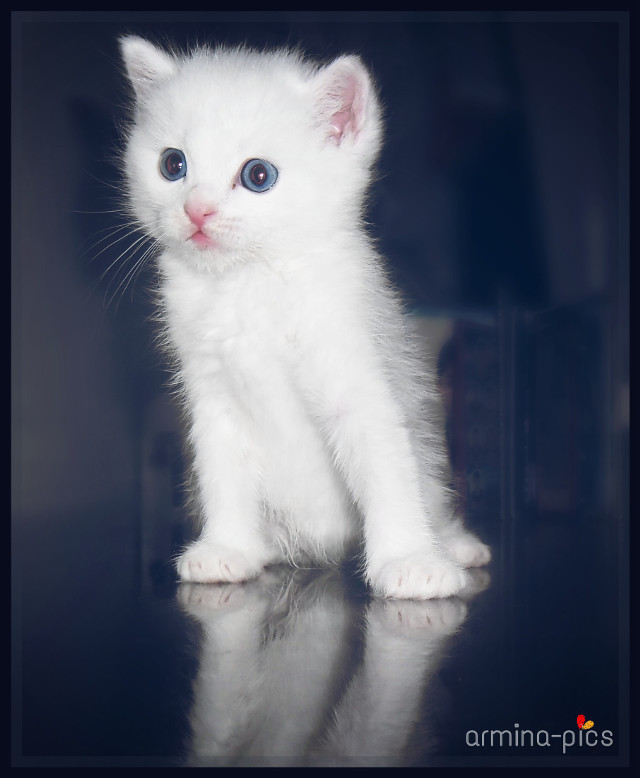 #wapfurryfriends My little Viki ^_^ <3 Repost for contest! :))) #pets