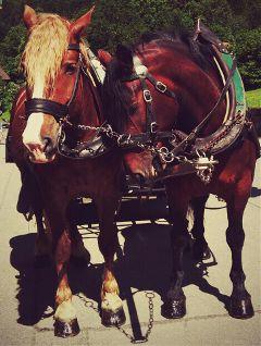 wapfurryfriends wppanimals horse buddies