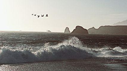 summerstory seafoameffect wave