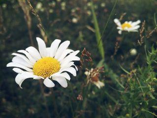 flower nature photography dodger summer