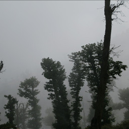 fogbound tree photography travel nature
