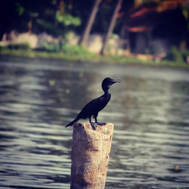 #nature #photography #beach