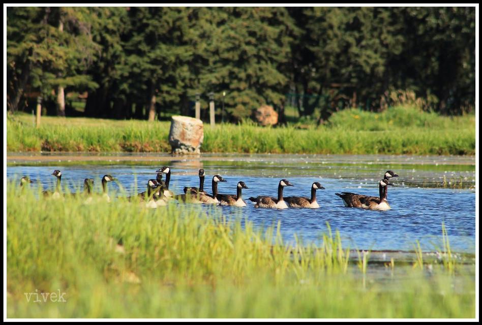 #nature #photography #summer #birds  #buck lake