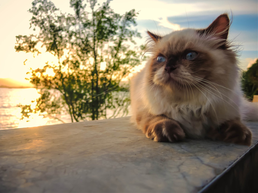 sarsi cat #cute #nature #beach #travel #photography #cat #thailand #phuket #sea #stone #sky #island #sunset #tree #smile