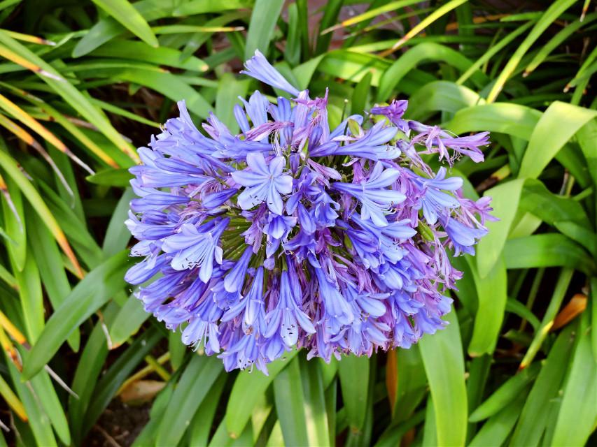 #flower  #nature  #closeup  #photography