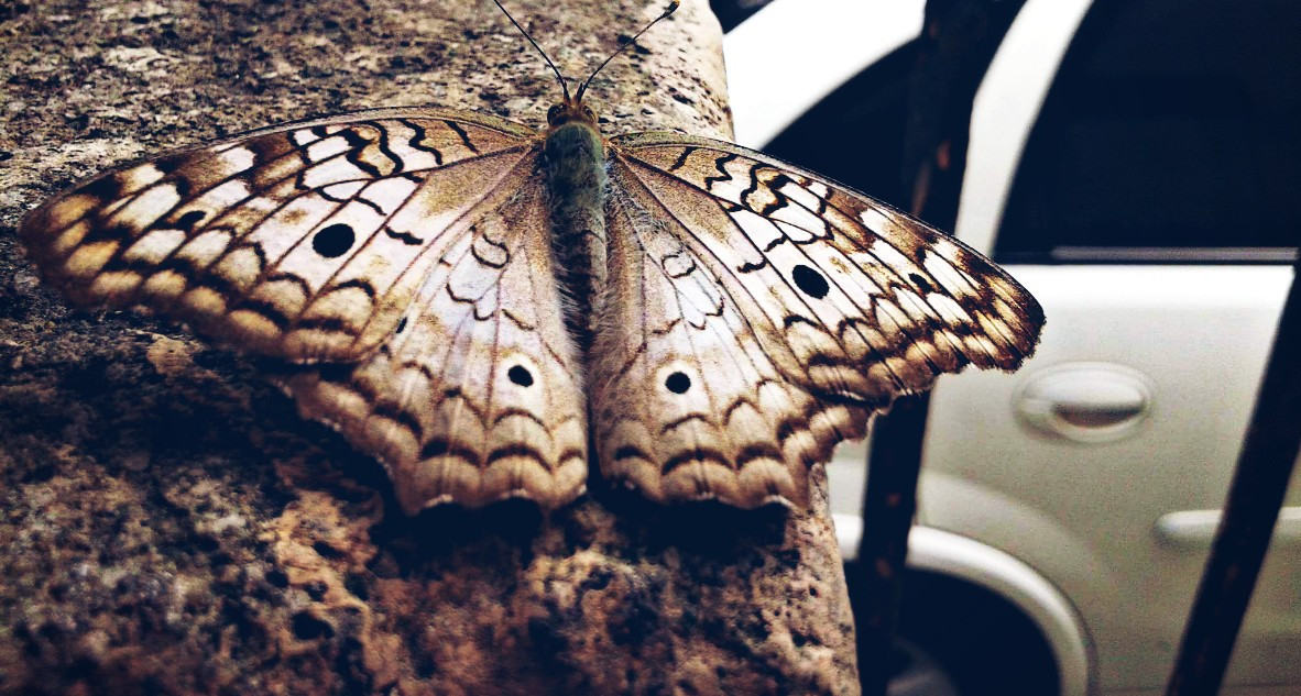 Taken by my friend Edeilson (a very special person) *-* <3   #butterfly #nature #photography