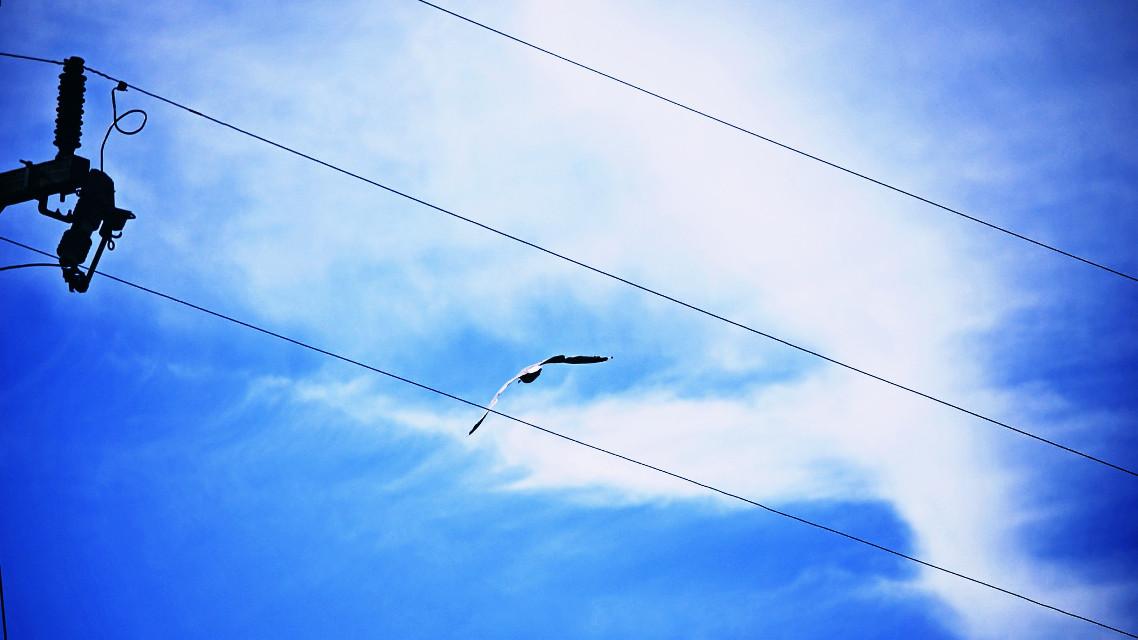 #blue #dailyinspiration #photography