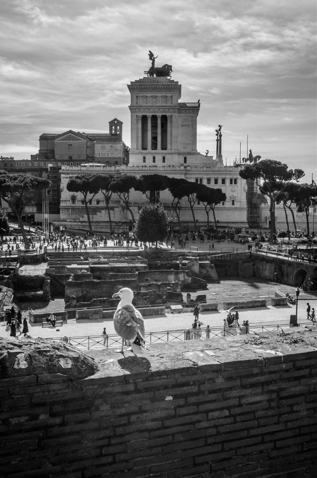 Rome. Black&white.  #blackandwhite #rome #monochrome #cityscape #photography #street