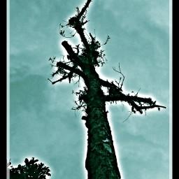 stilllife tree emotions flower love