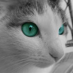 eyes gdaddcolor wppanimals wapaddcolor pcpets