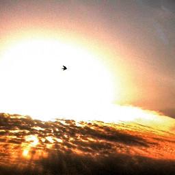 qtrial bird sun shadows