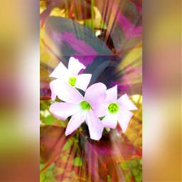 flower wildplant photography