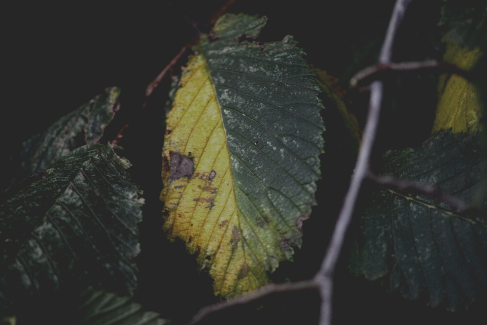 Don't look I'm changing #nature #leaf #drama #colorful #autumn #outandabout #photography