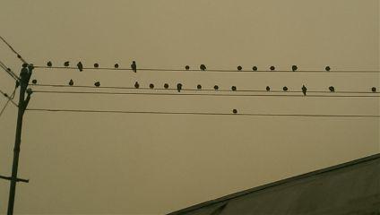 autumn byebyesummer birds earlymorning greysky